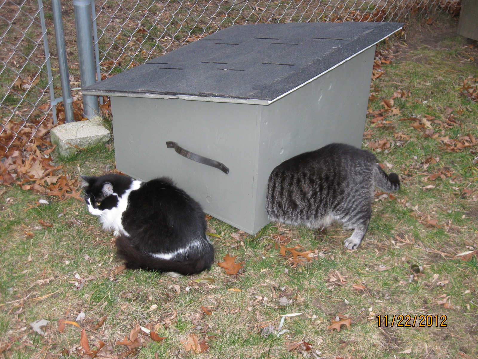 Feral Cat Winter Shelter Plans